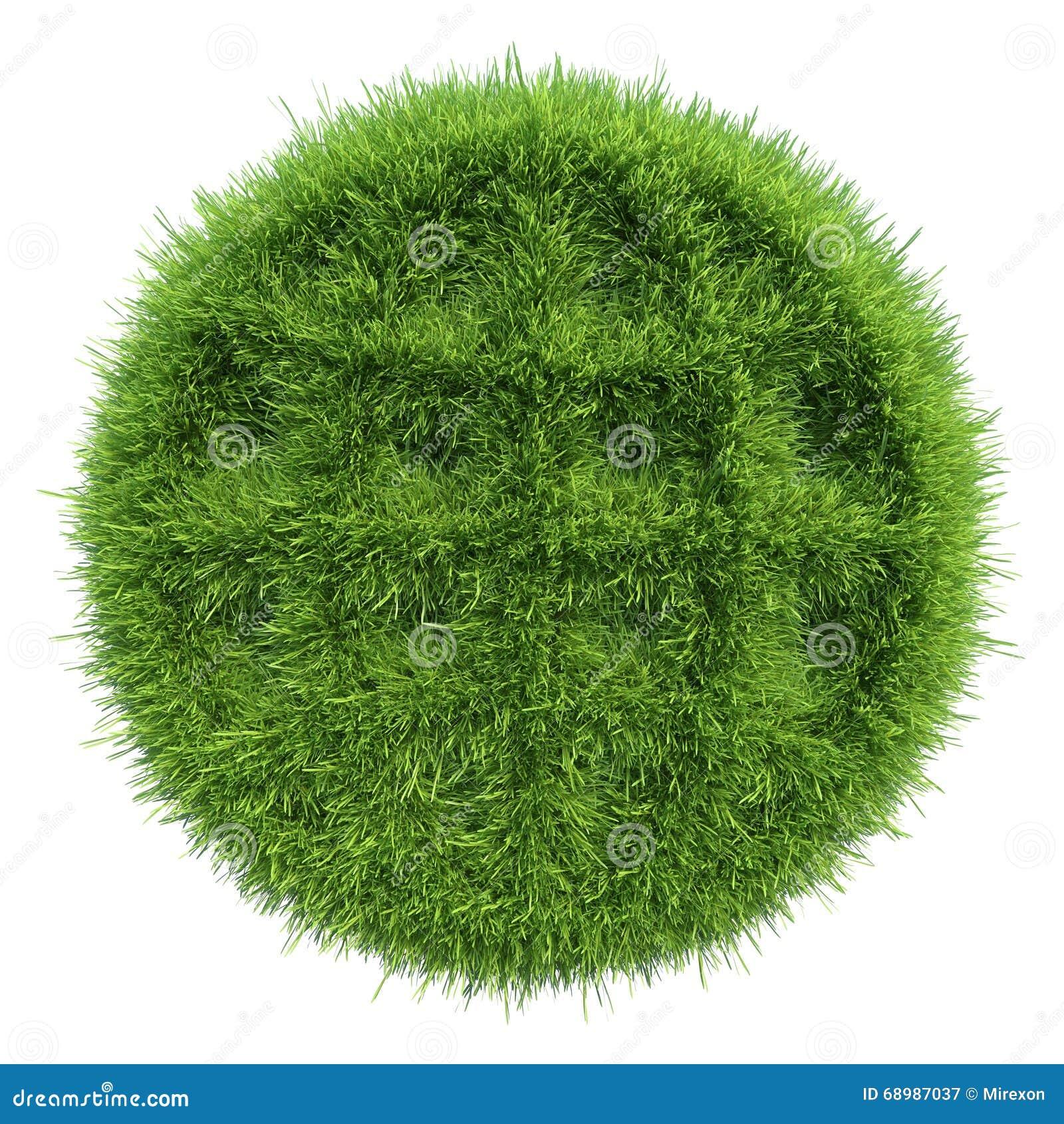 Forma redonda de la hierba verde en el fondo blanco