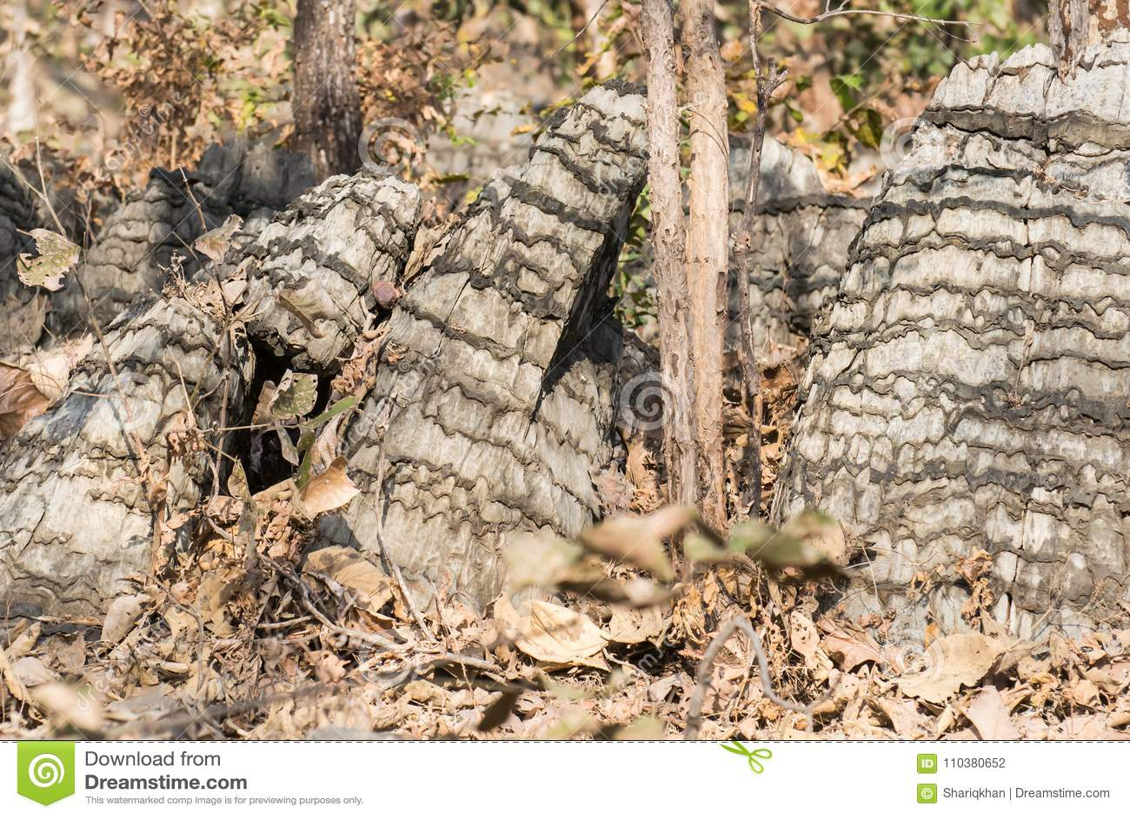 Formación de roca única en la India central
