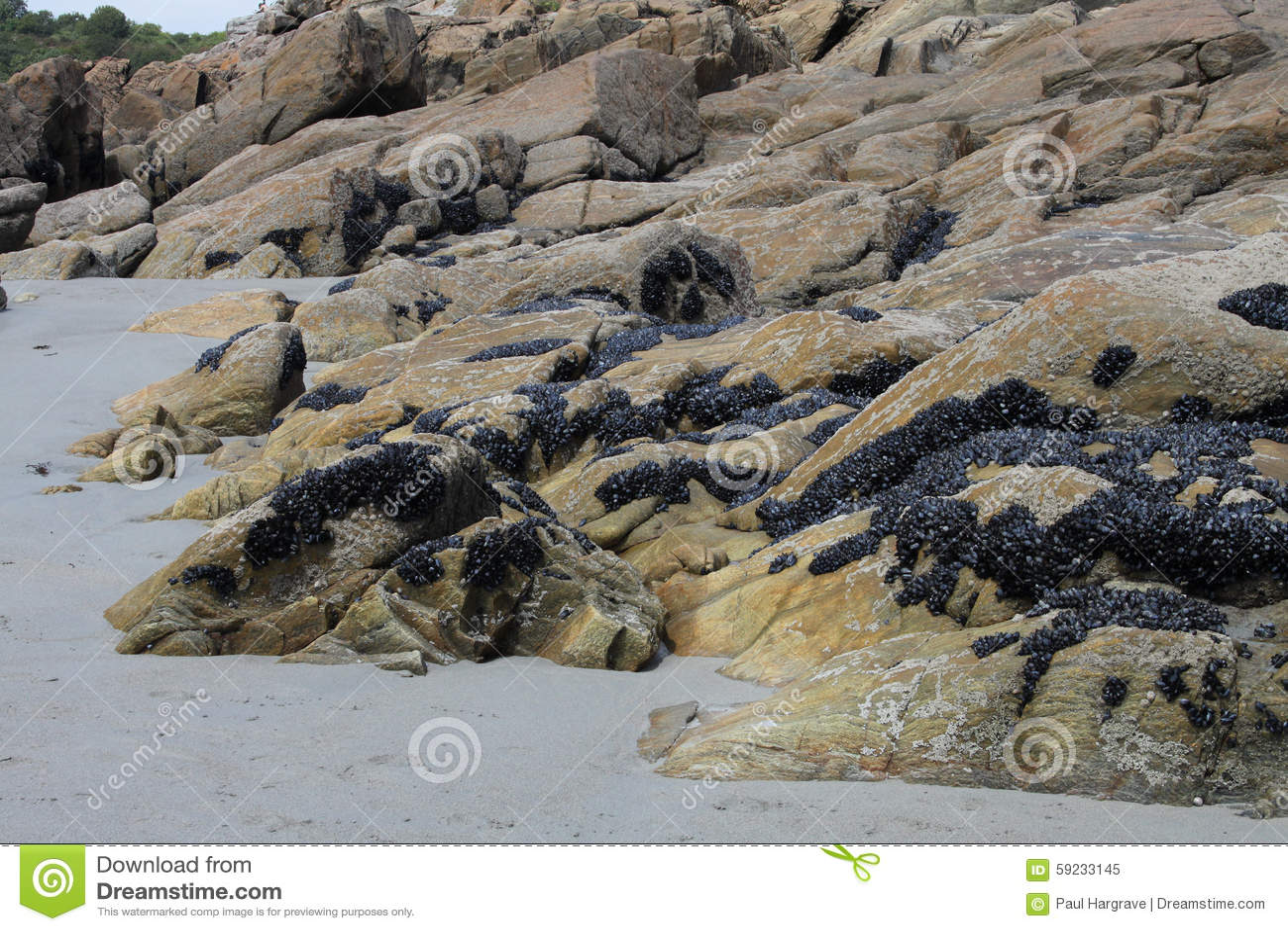 Download Formación De Roca Con Los Mejillones, Bretaña, Francia Imagen de archivo - Imagen de paisaje, playa: 59233145