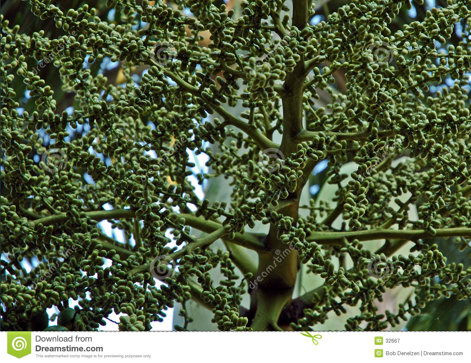 Download Formación Del Germen De La Palma Imagen de archivo - Imagen de ovum, fuente: 32667
