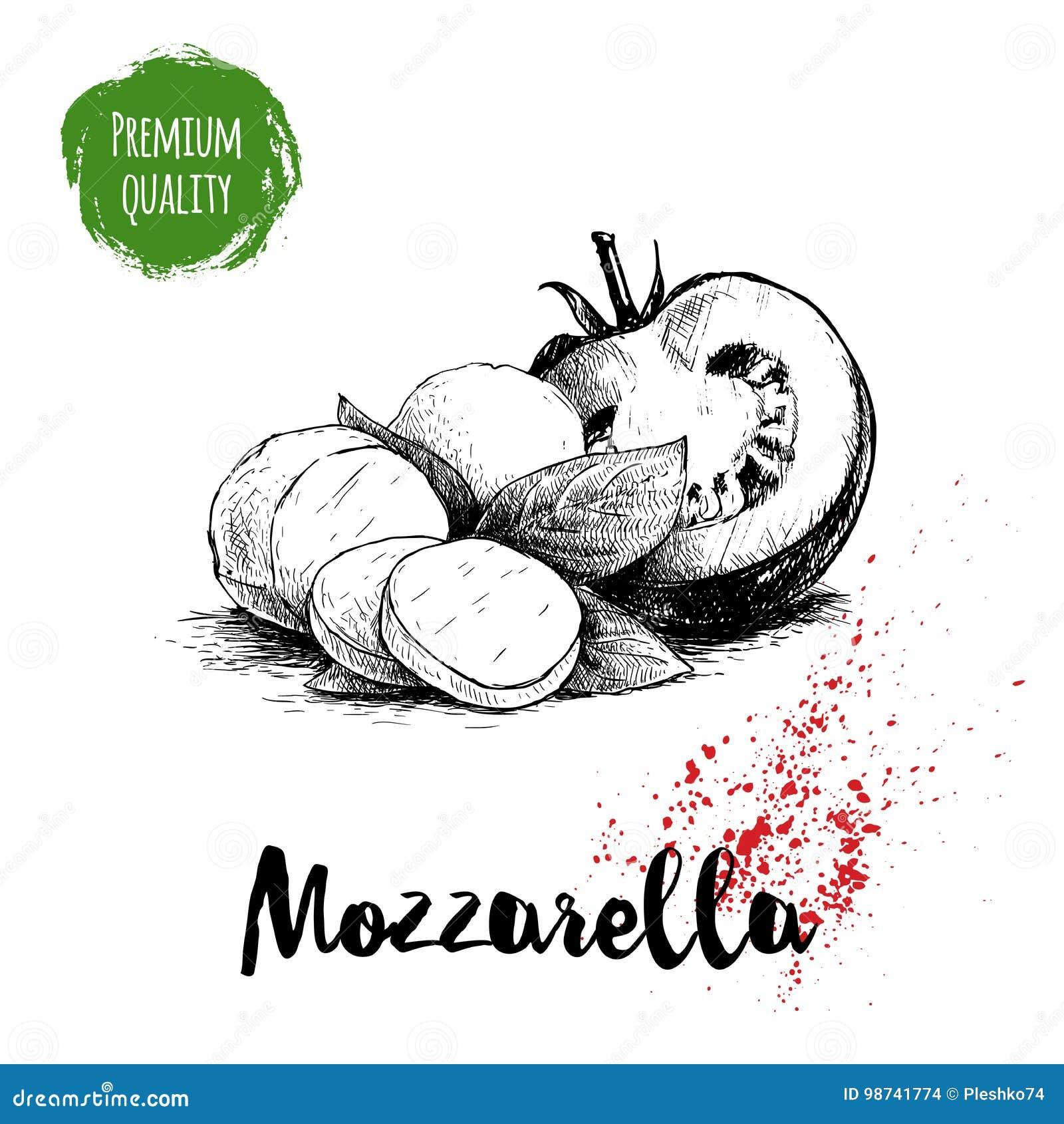 Formaggio disegnato a mano della mozzarella di stile di schizzo con le foglie del basilico e la metà del pomodoro Ingredienti del