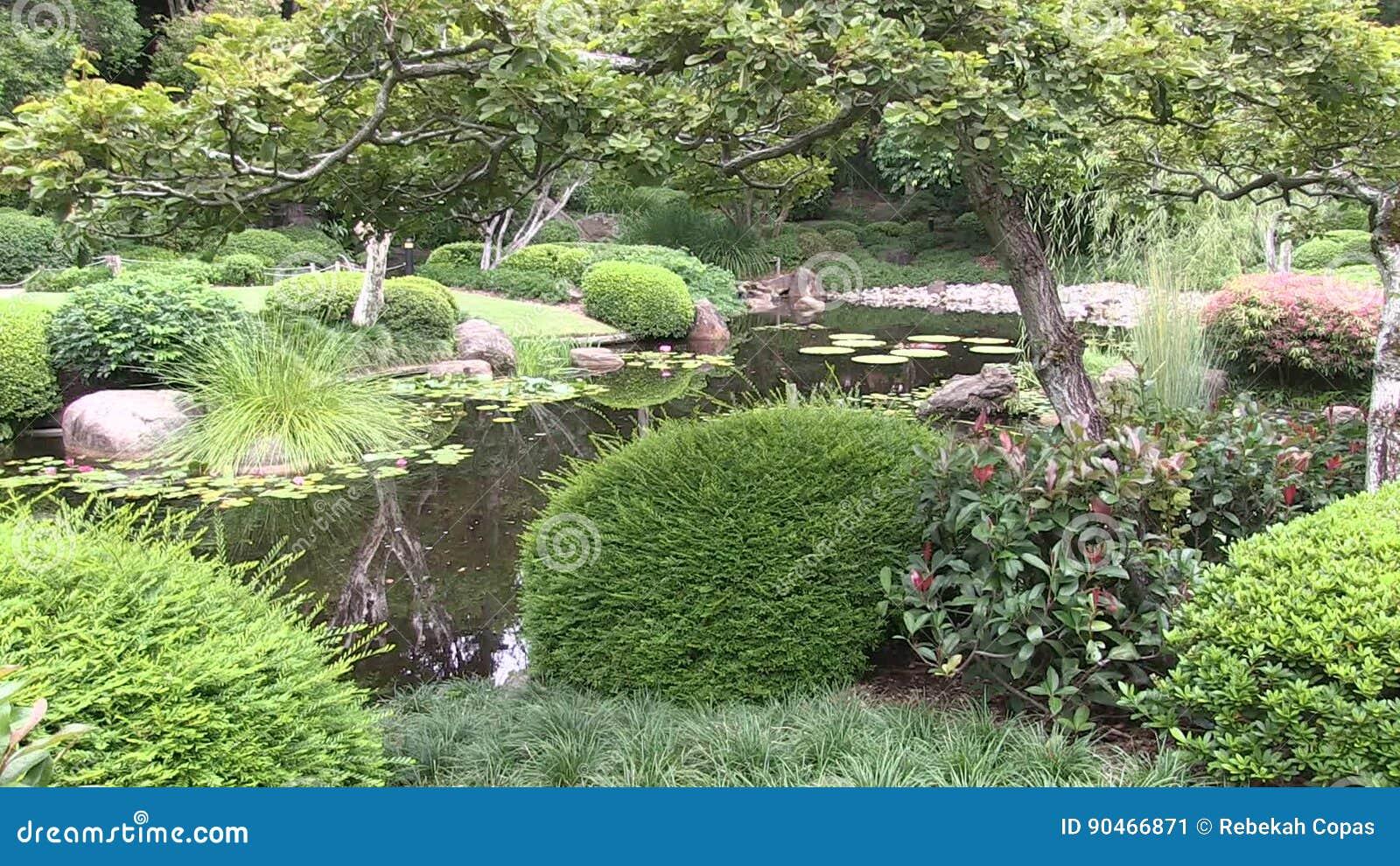 A Formal Japanese Garden In Australia At Brisbane S Mount Coo Tha Botanic Gardens Stock Video Video Of Australia Shrub 90466871