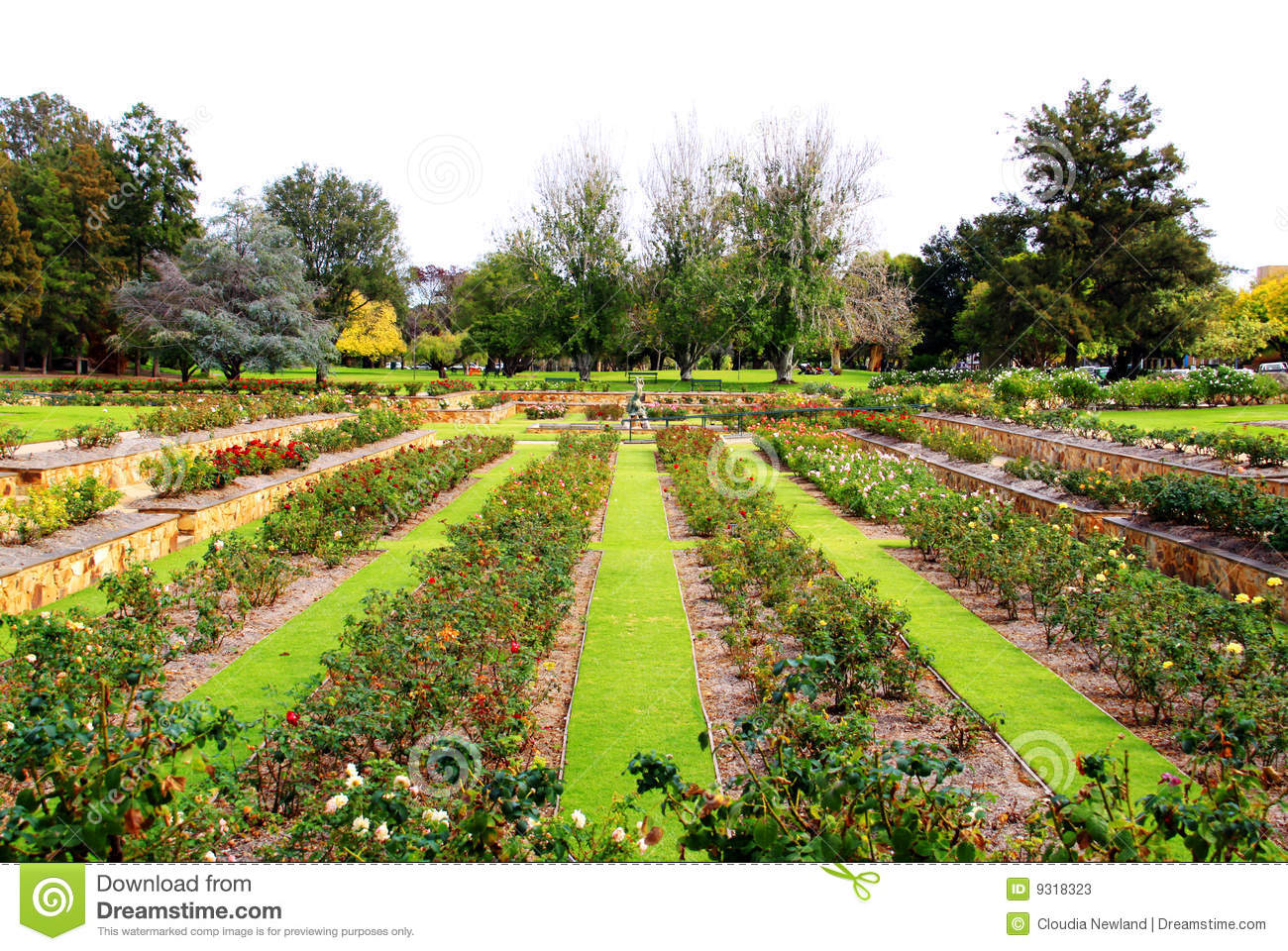 Formal rose garden adelaide australia stock image for Garden trees adelaide