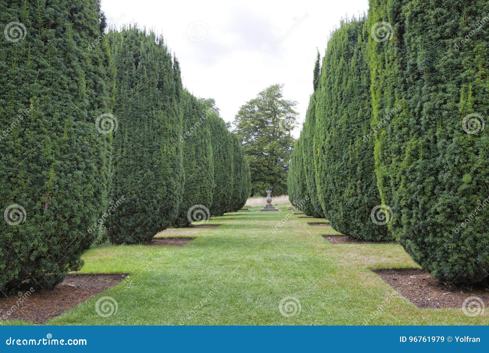 Formalny kształtujący teren ogród z szyszkowego topiary cisowymi roślinami