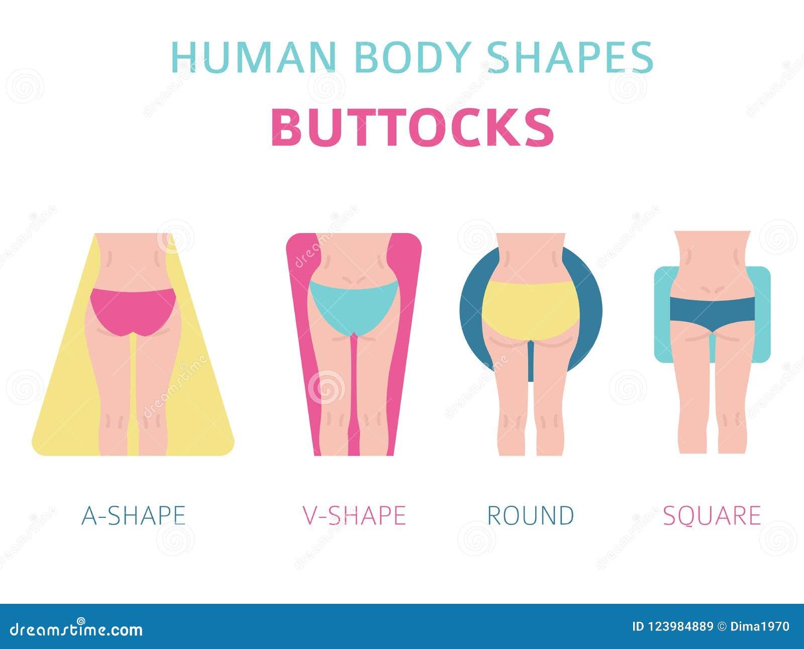 Formas Del Cuerpo Humano Tipos De Las Nalgas De La Mujer Fijados ...