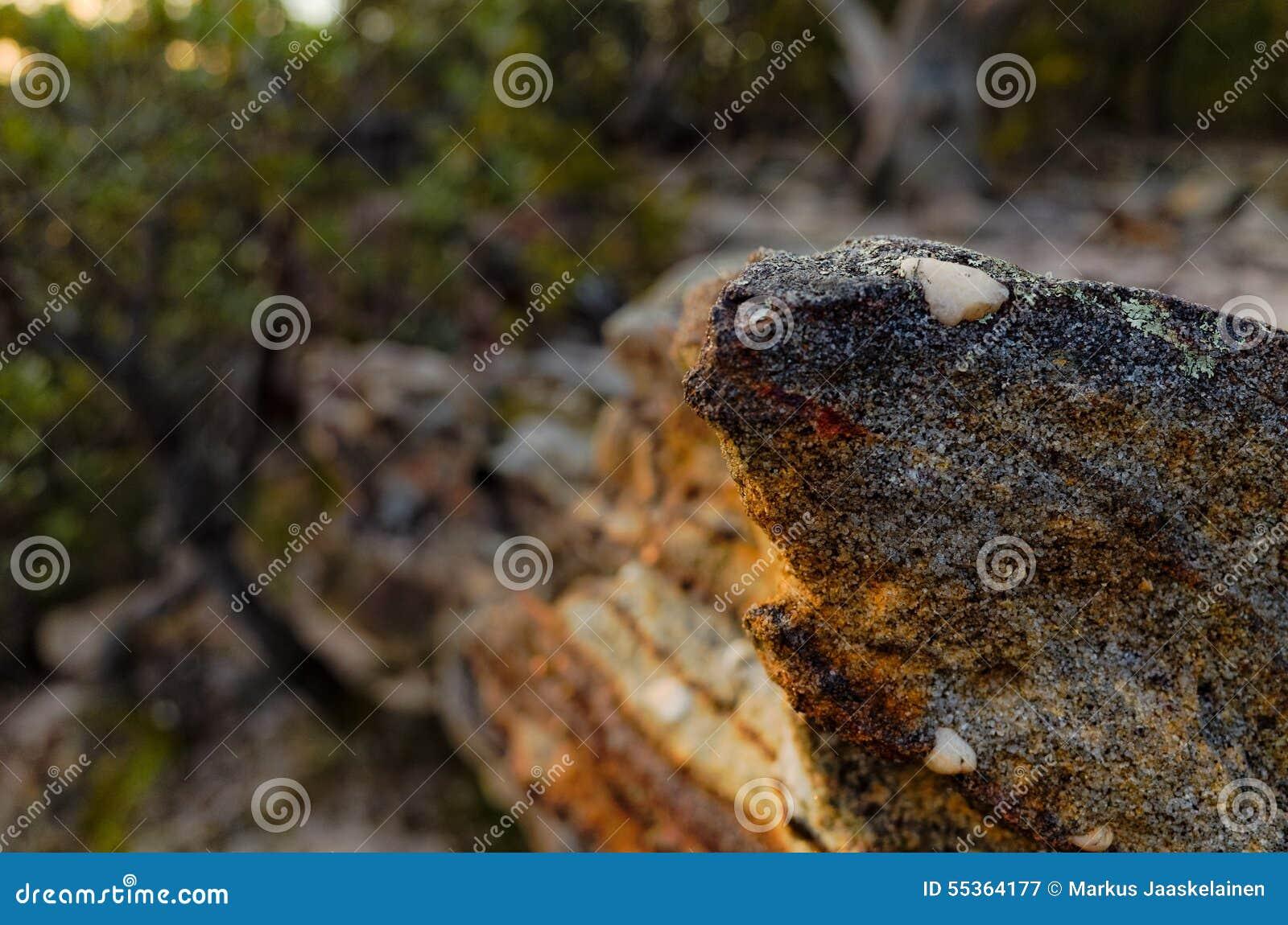 Formazioni rocciose nel cespuglio australiano