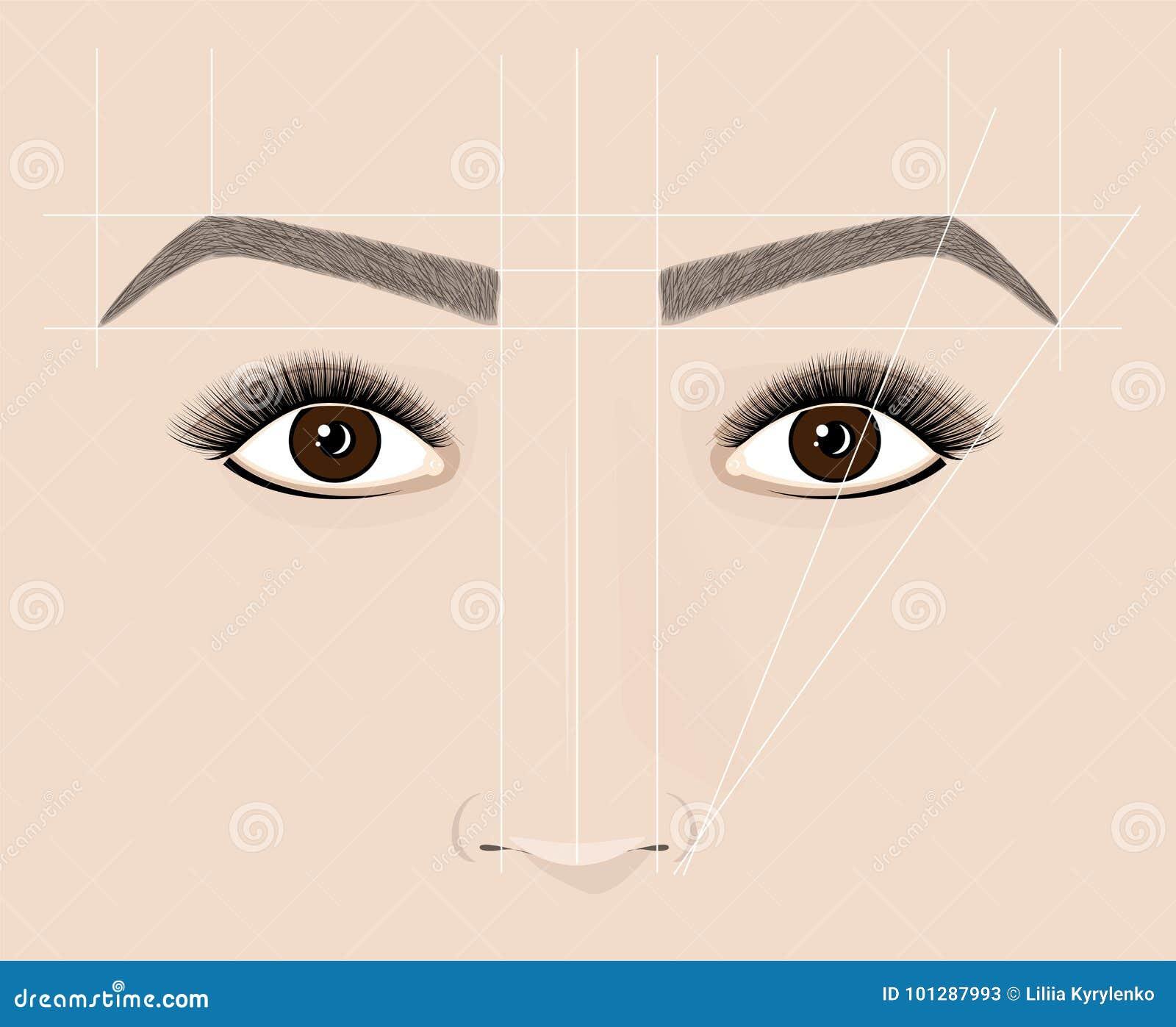 Forme classique des sourcils Microblaining et maquillage permanent Le plan de la construction correcte