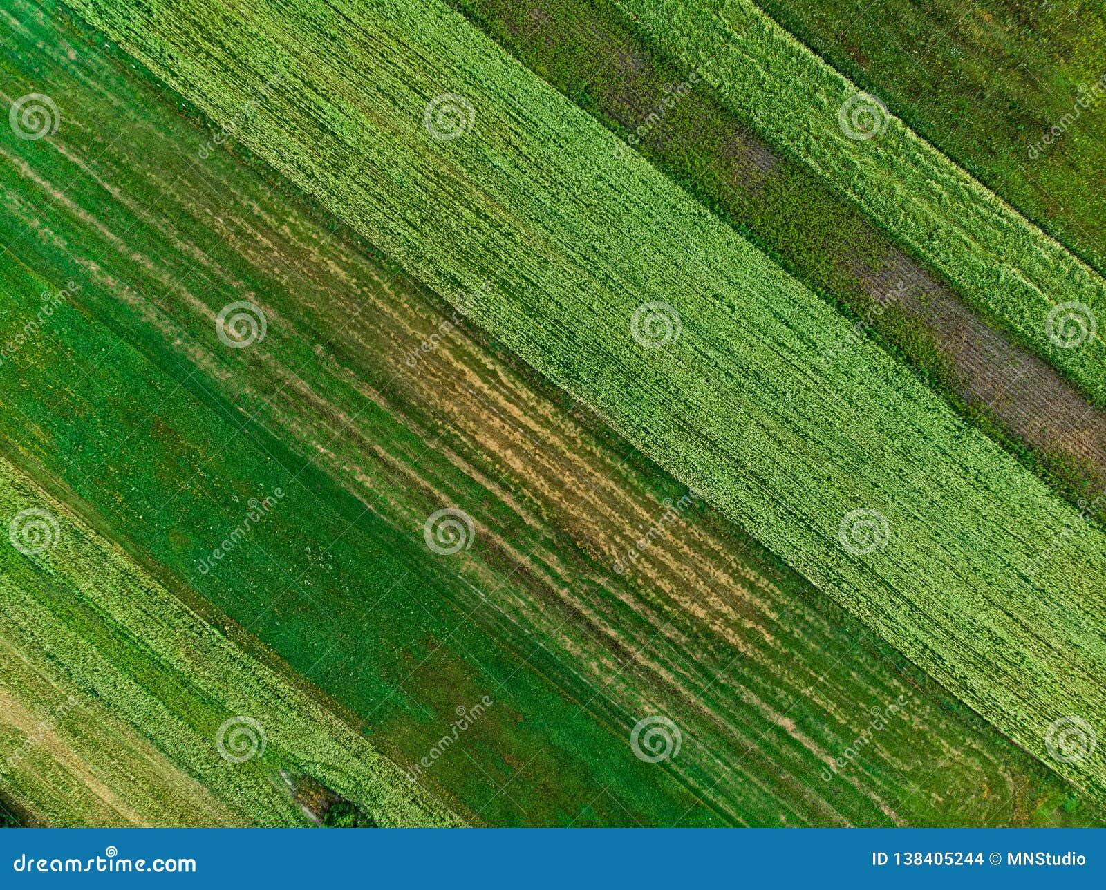 Formes géométriques abstraites des colis agricoles de différentes cultures dans des couleurs vertes et jaunes Dessus aérien en ba