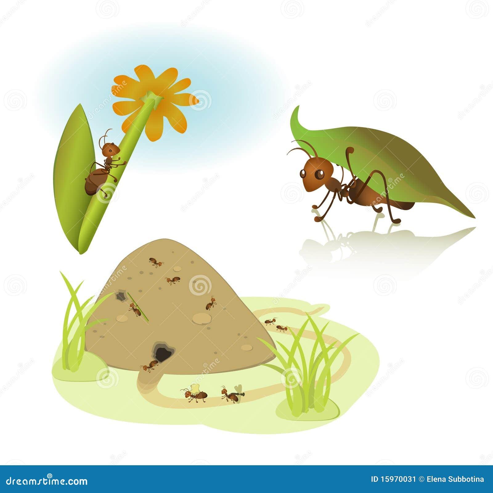 Formigas Dos Desenhos Animados Do Vetor Ilustração Do