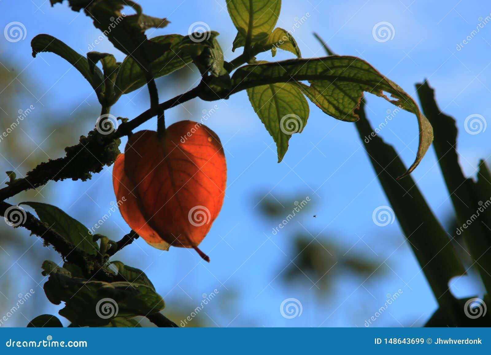 Formte orange Herz zwei Bl?tter, die auch die Blume im mids des Gr?ns sind