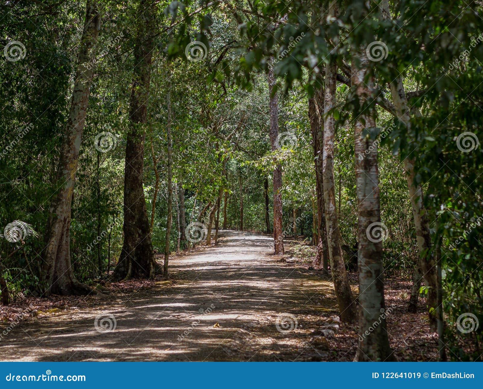Forntida bana till och med den mexicanska djungeln i Calakmul
