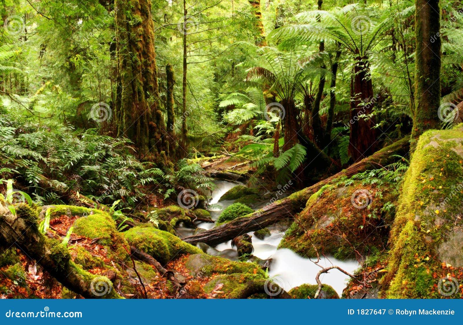 Forntida rainforest