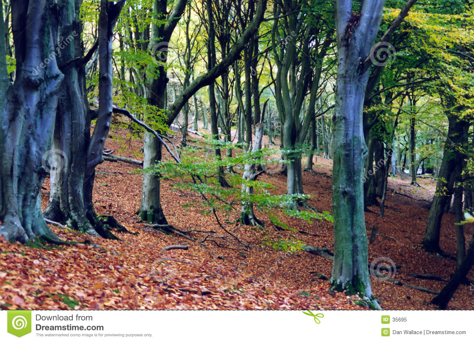 Forntida skog