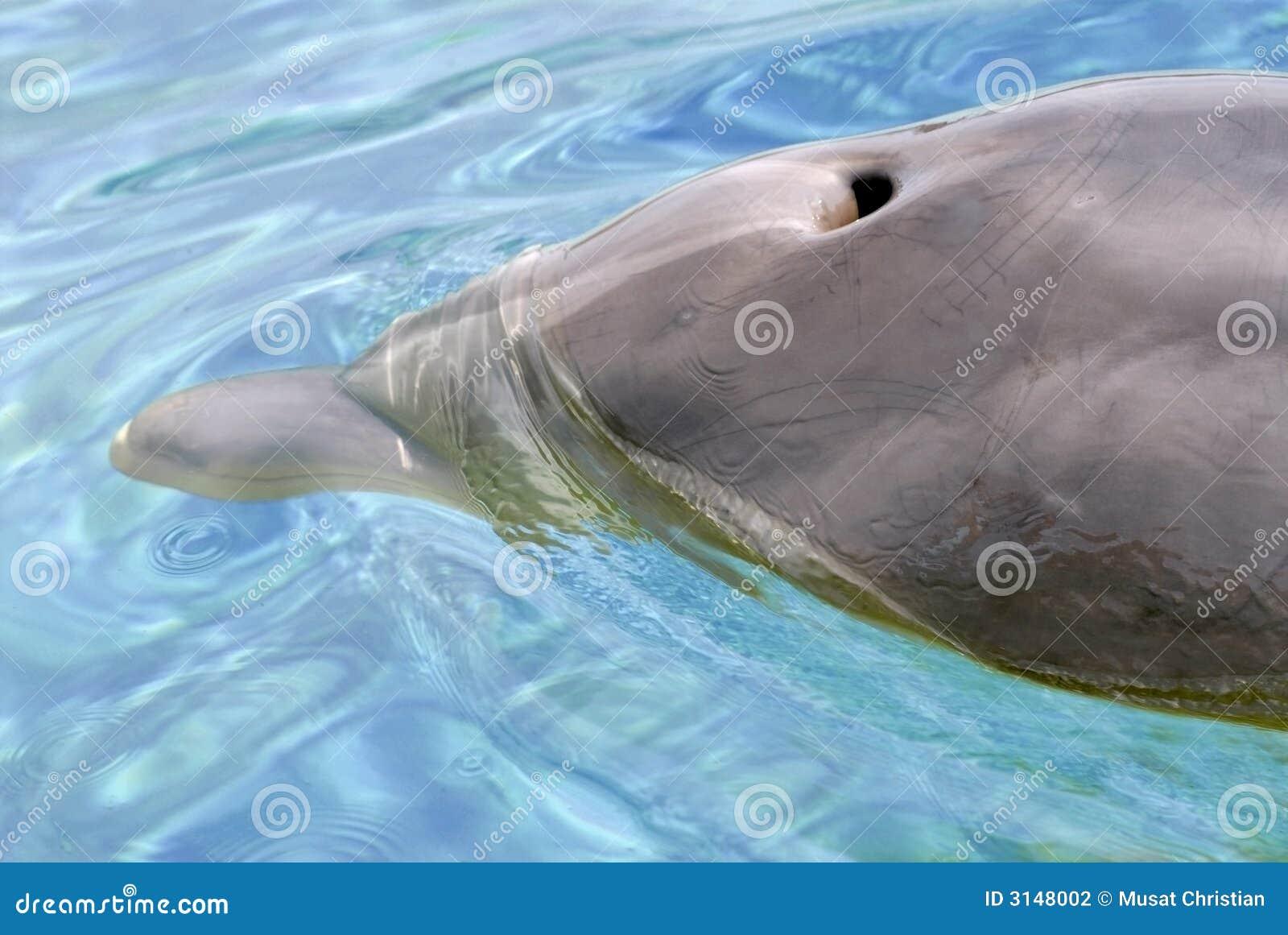 Foro del colpo del delfino