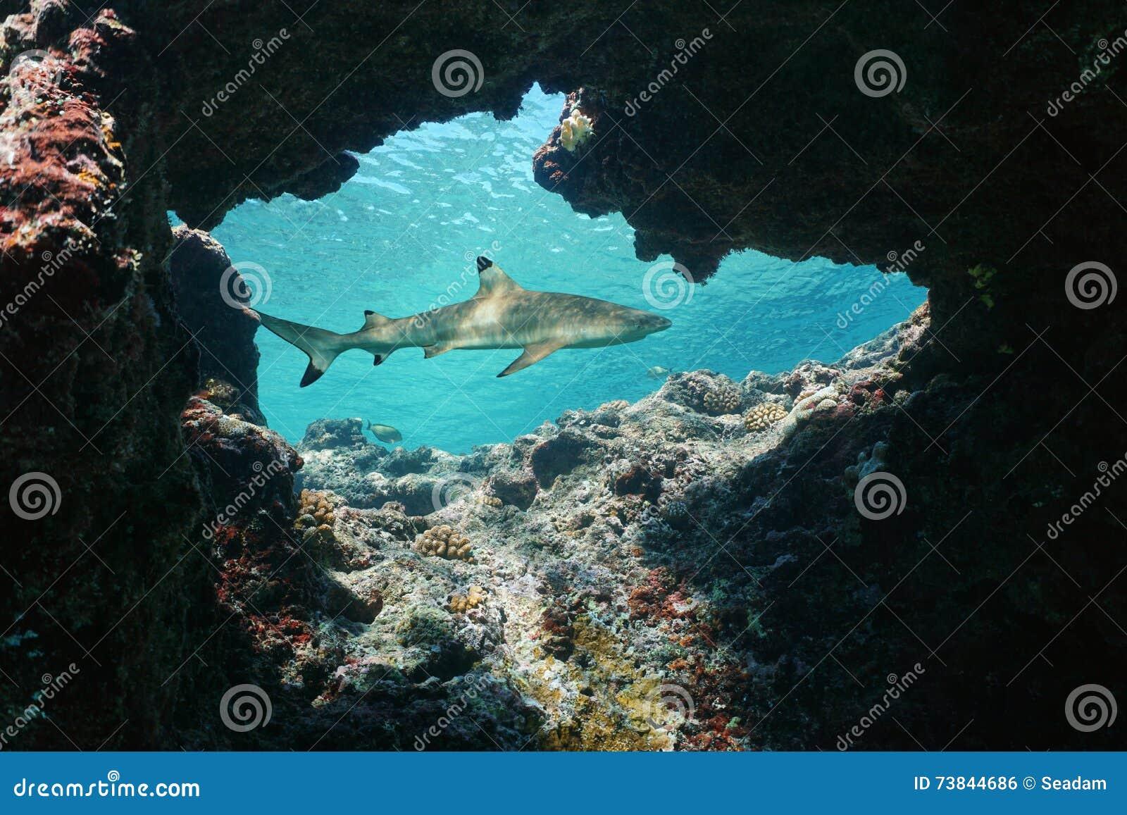 Foro naturale subacqueo con uno squalo della scogliera del blacktip