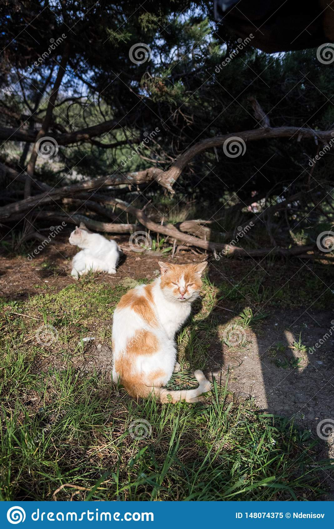 Wild homeless ragged cats walk in nature on the southern coast of the Crimea peninsula