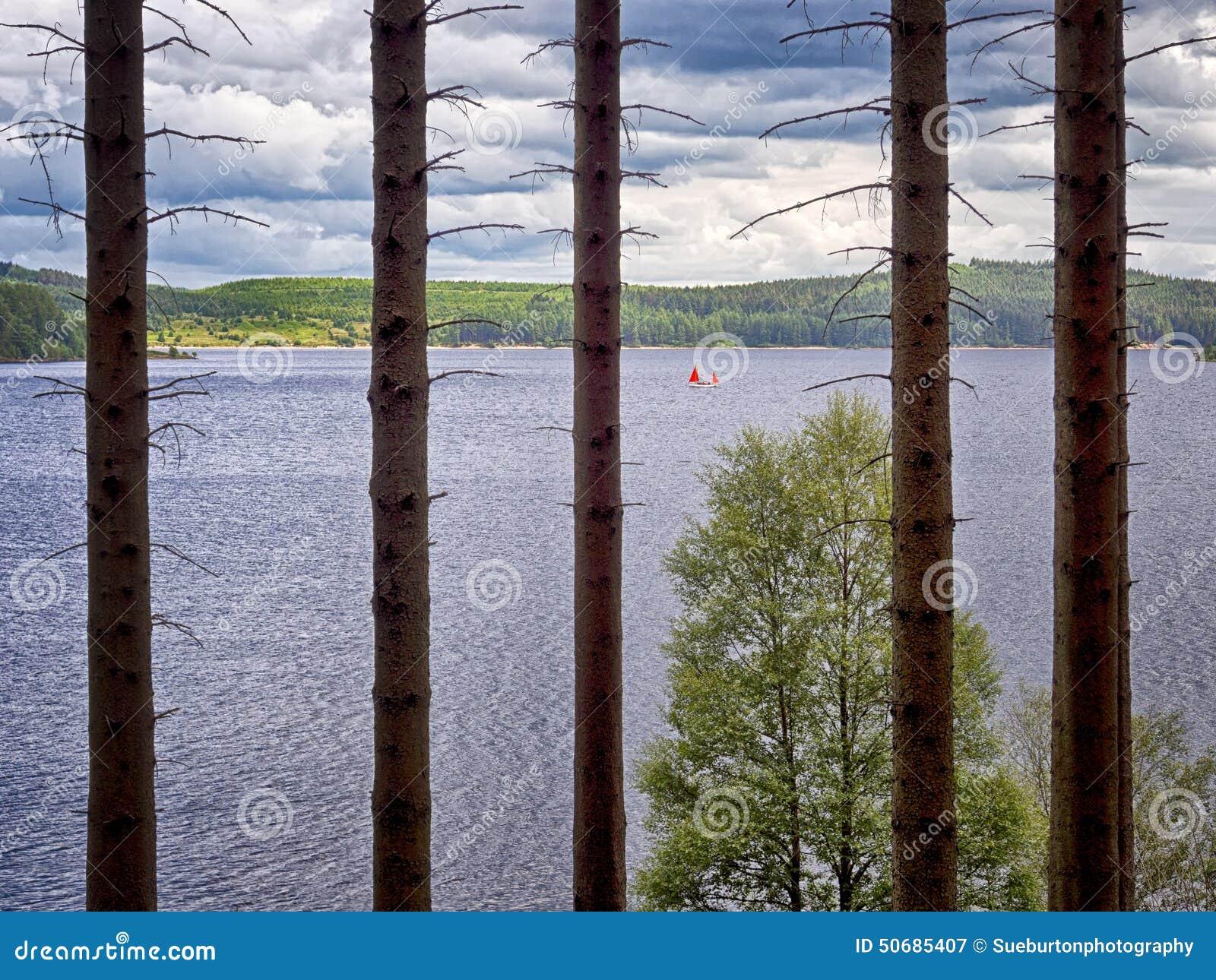 Download Forrest树的守场员 库存图片. 图片 包括有 水库, northumberland, 英国, forrest - 50685407