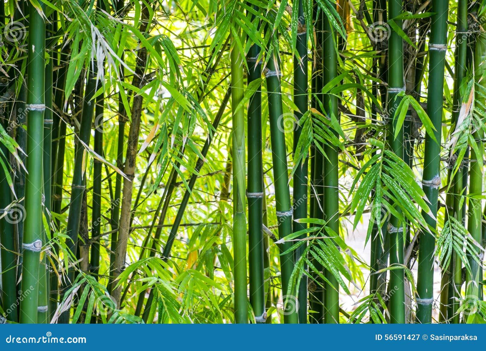 Forrest的竹子