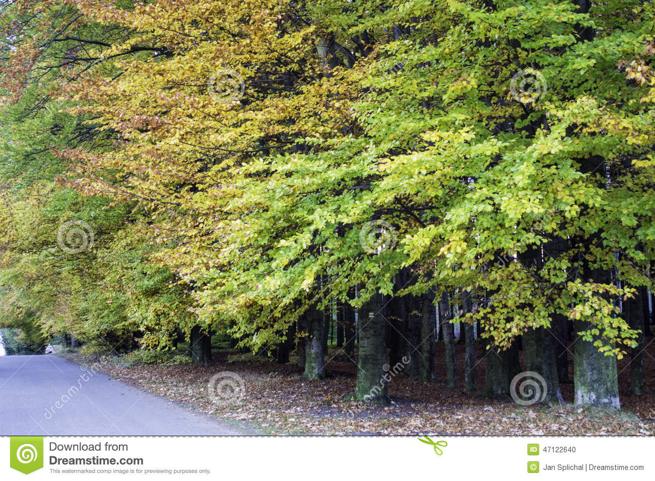 Forrest in automn