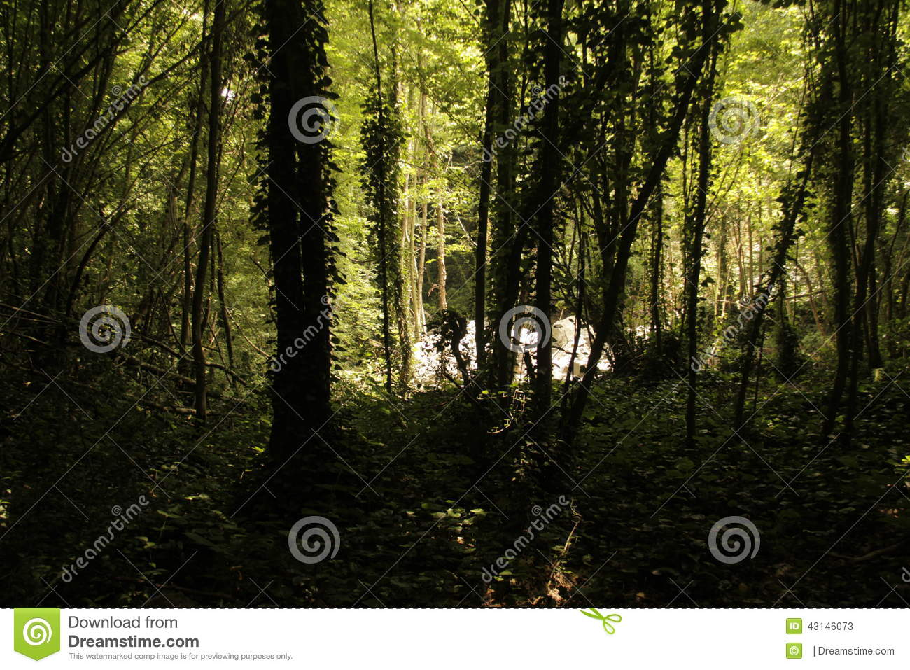 Forrest trees shadows