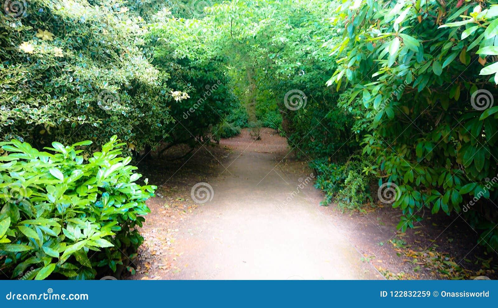 Forrest Weg der Märchen unter der Sonne