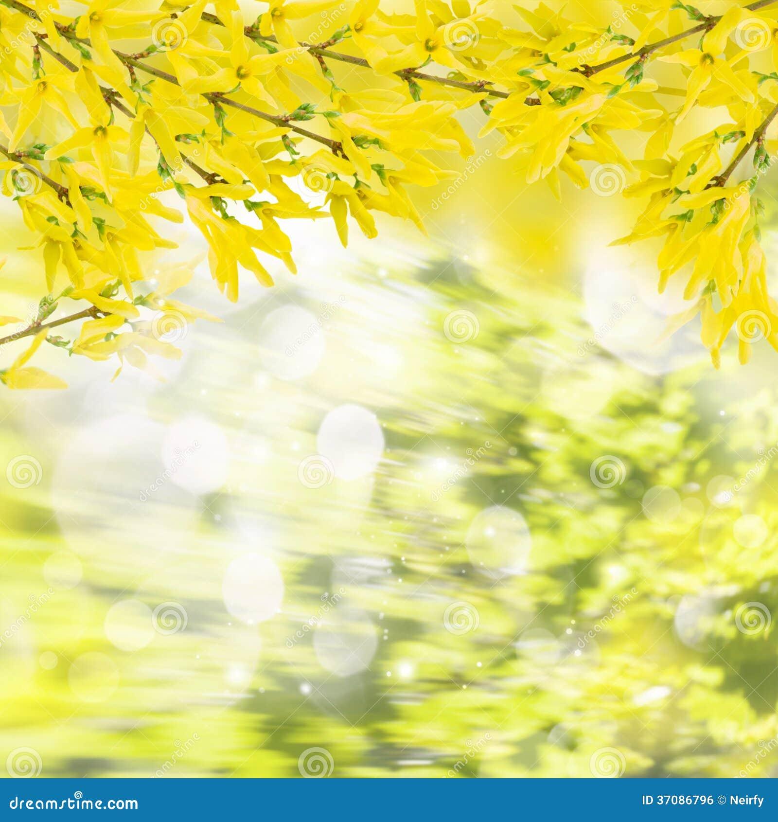 Download Forsycje kwitną gałązki zdjęcie stock. Obraz złożonej z kolor - 37086796