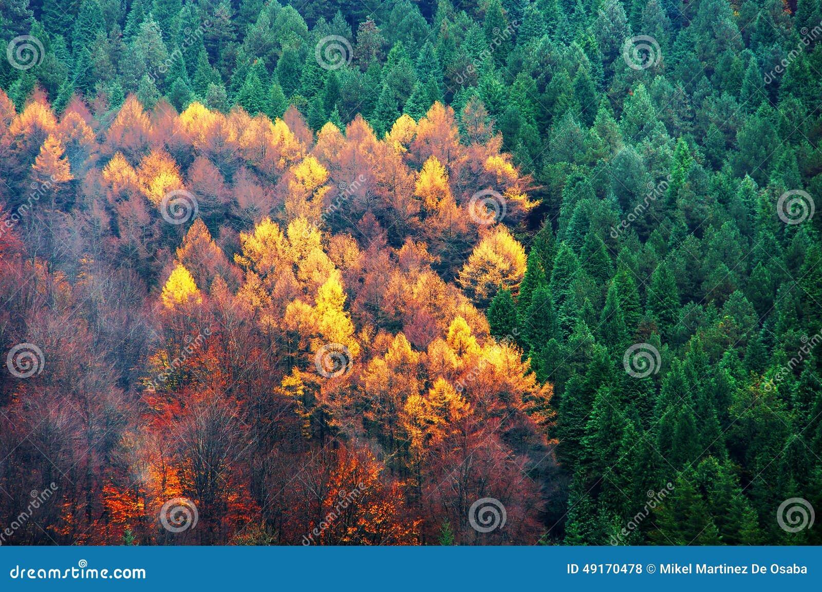 For t d 39 arbre feuilles persistantes et feuilles for Arbres a feuilles persistantes