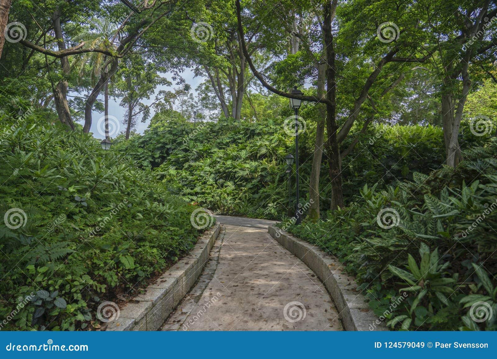 Fort Inblikkende Park het lopen weg tussen vegetatie
