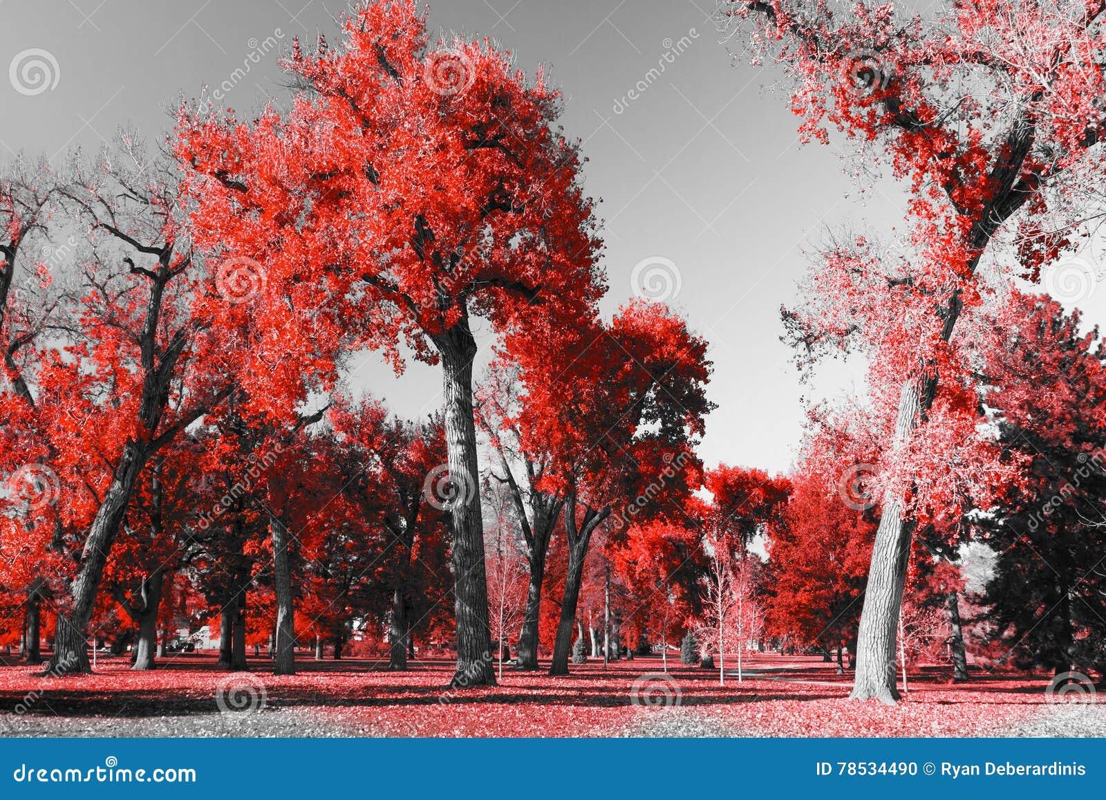 For t rouge dans le paysage noir et blanc photo stock image 78534490 - Le rouge et le blanc ...