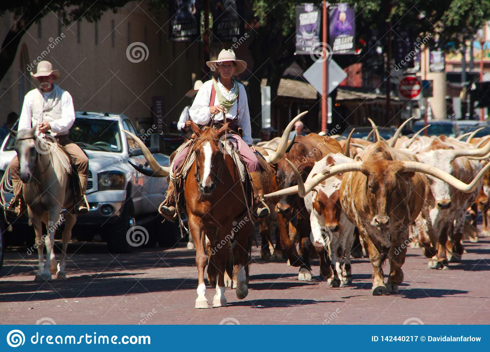 Fort Worth downtown cattle drive.