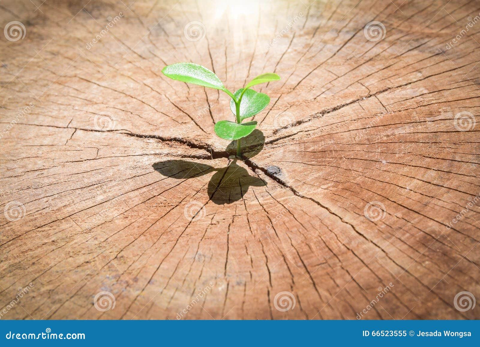 Forte piantina che cresce nell 39 albero concentrare del for Costruzione di un pollaio su ruote
