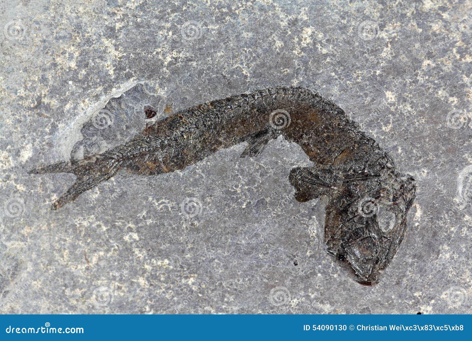 Fossiele vissen