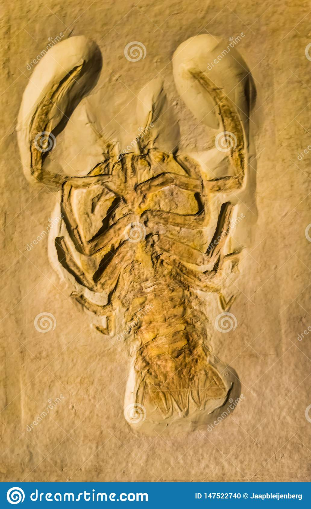 Fossil of a Cyclerion propinquus, extinct armored crab from the jurassic period