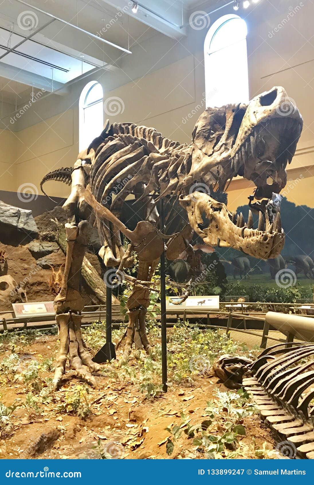 Fossil des ersten Tyrannosaurus Rex entdeckt in der Welt