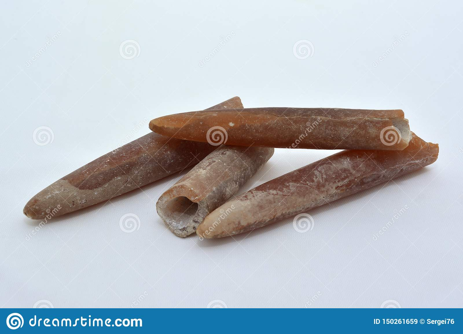 Fossil guards of belemnites.