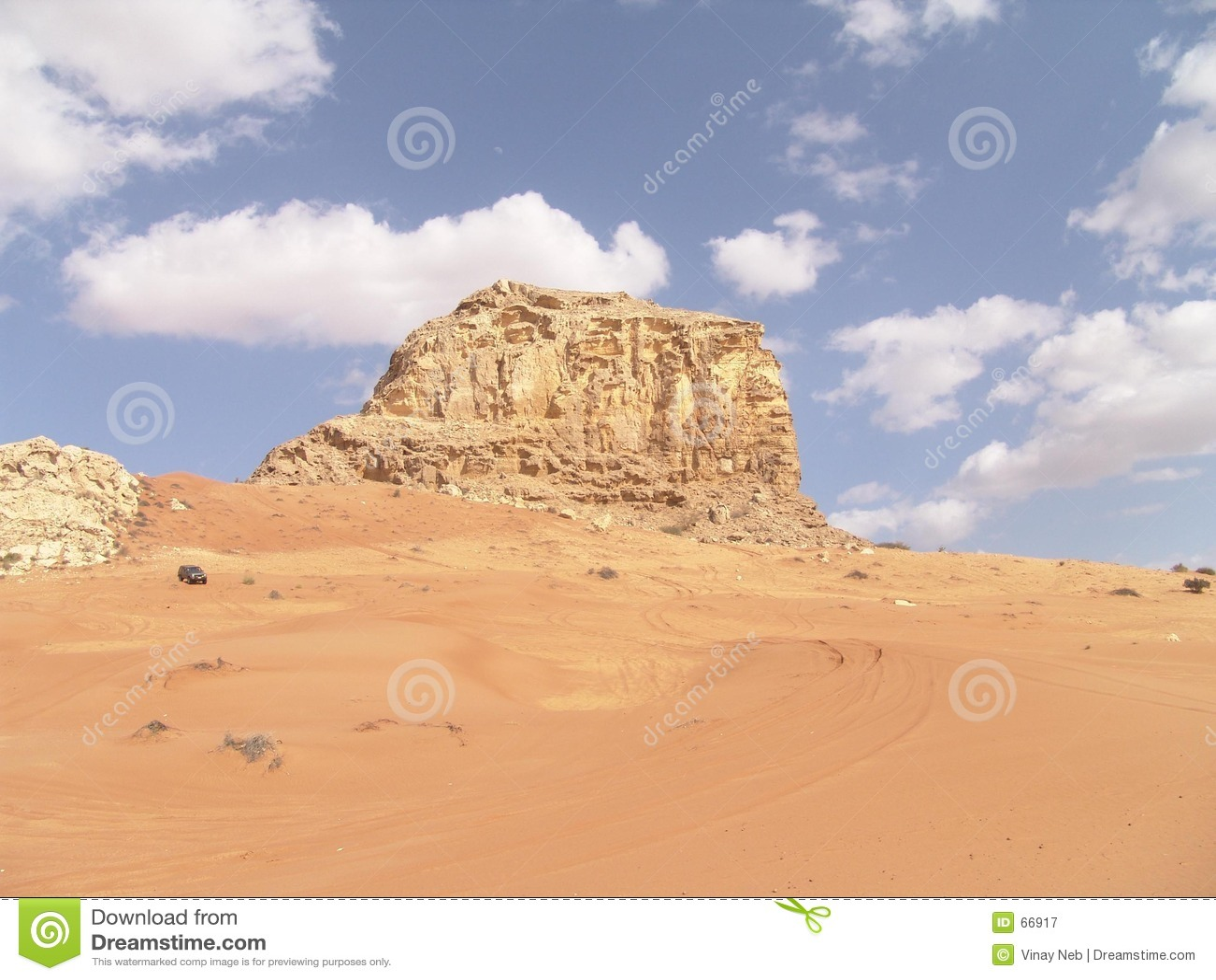 Fossil- rock