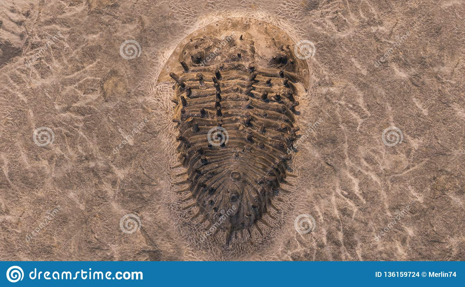 Fossil Trilobites Imprinted In The Sediment  4 Billion Year