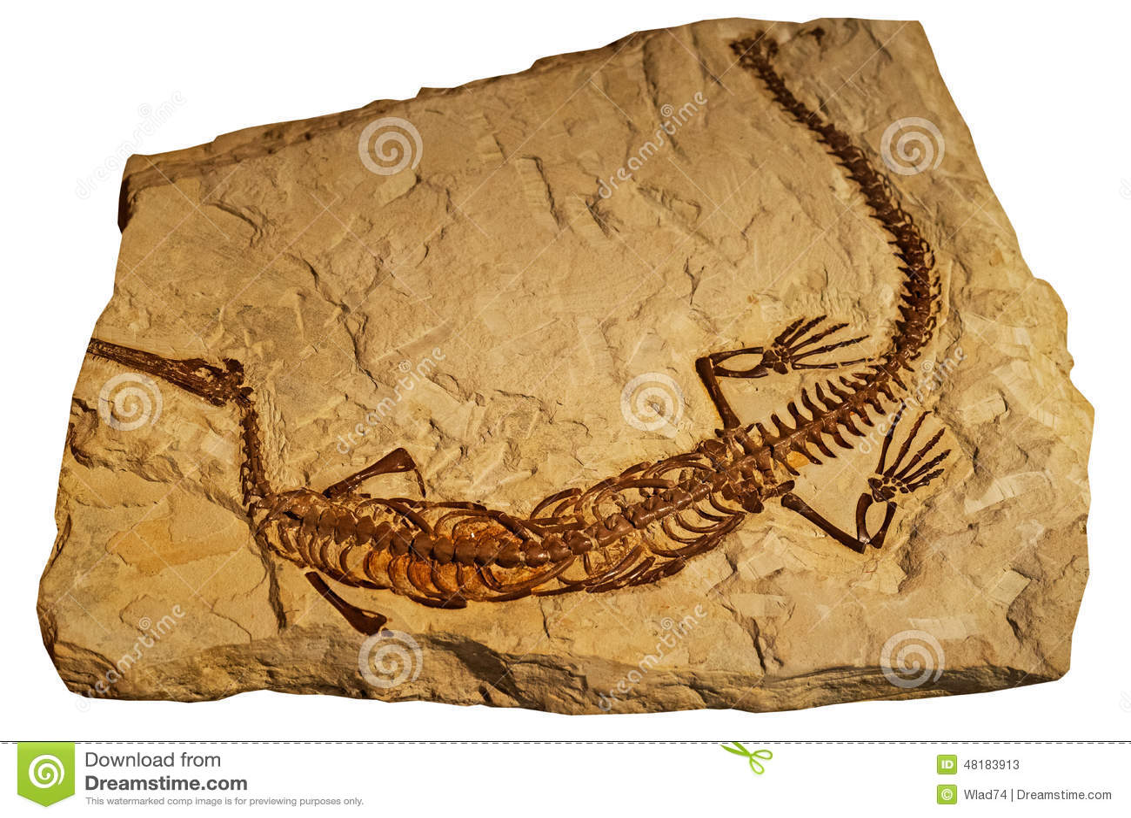 Fossile del rettile antico in roccia