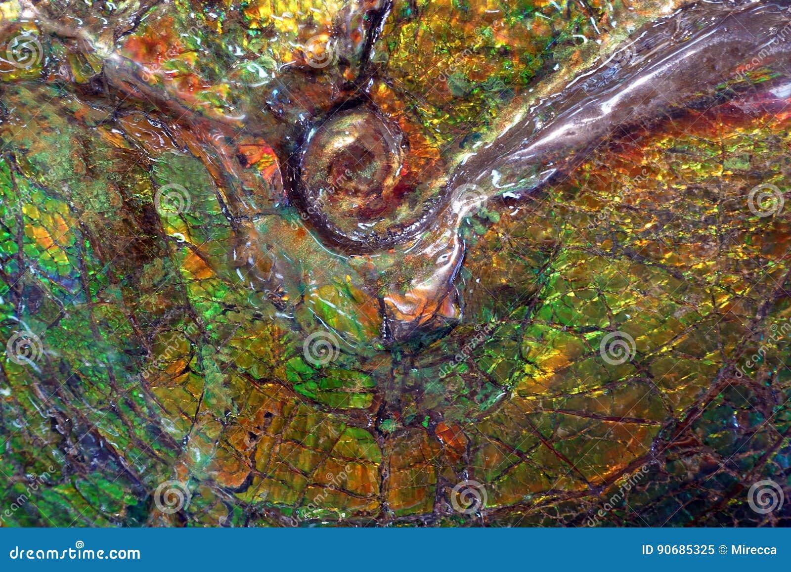 Fossile di Ammolite