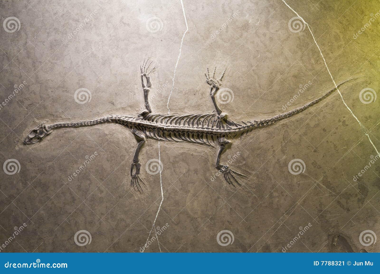 Fossiles de dinosaur