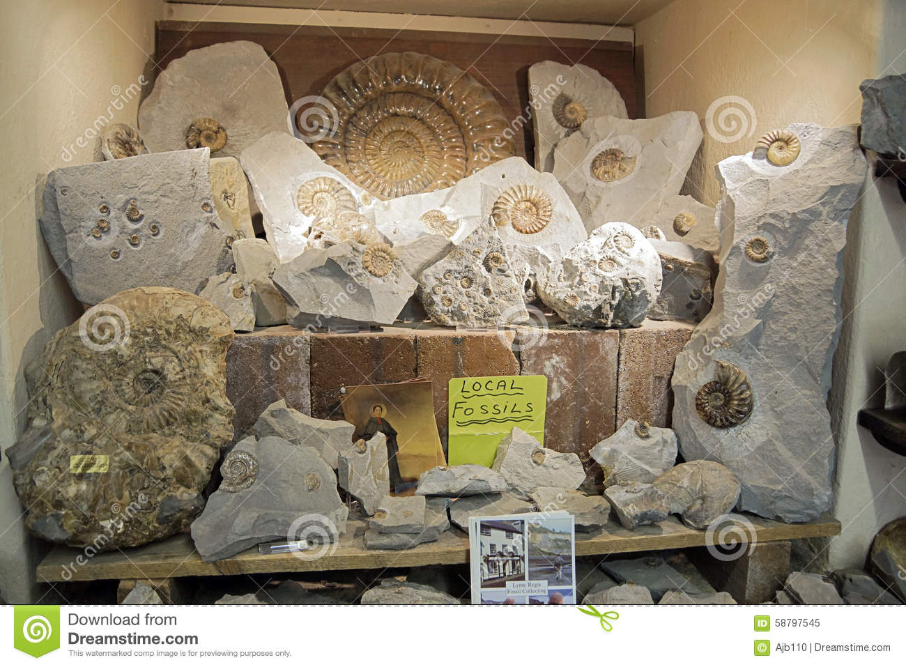 Fossils editorial image  Image of shop, prehistoric, found