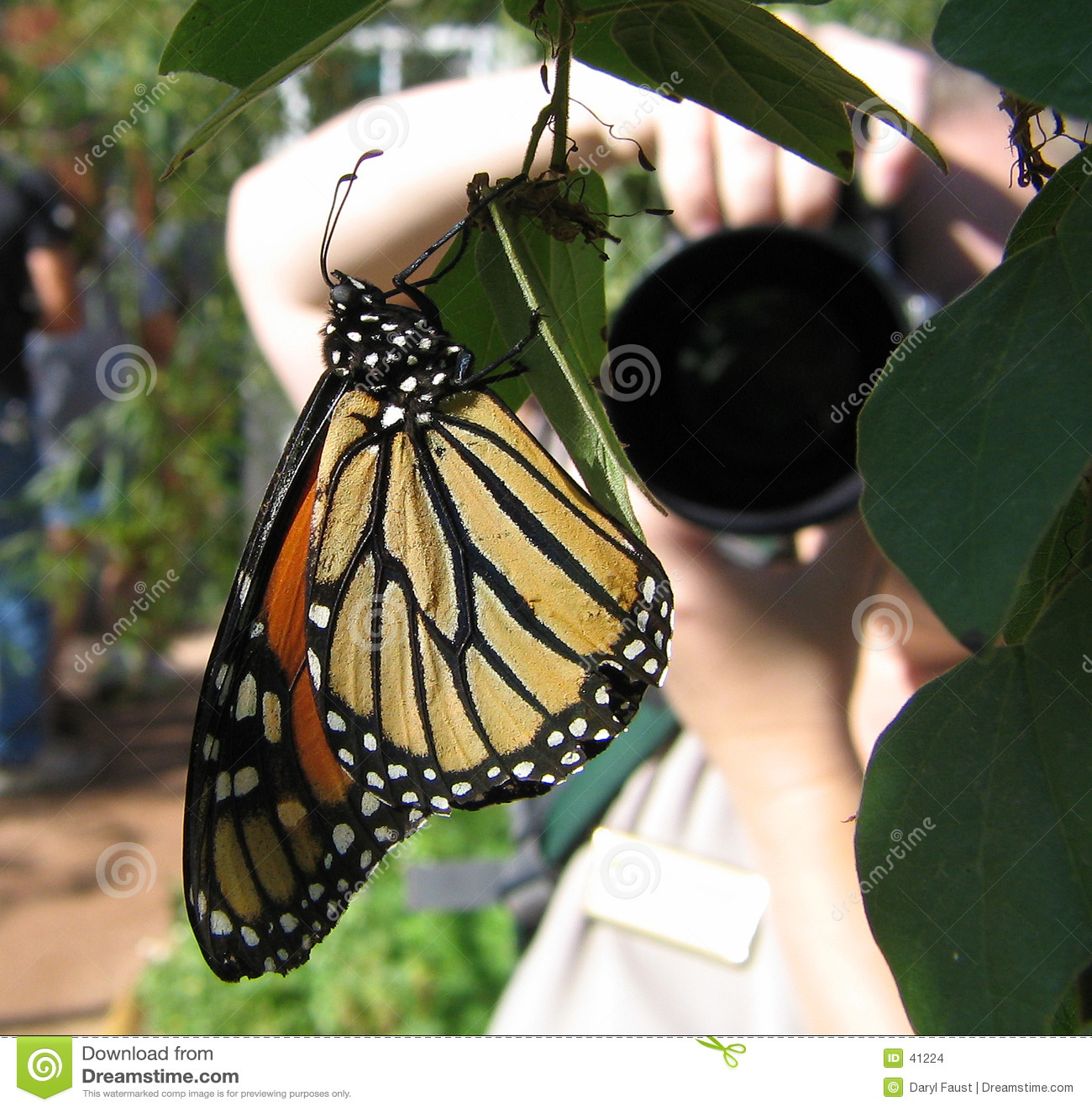 Fotógrafo da borboleta