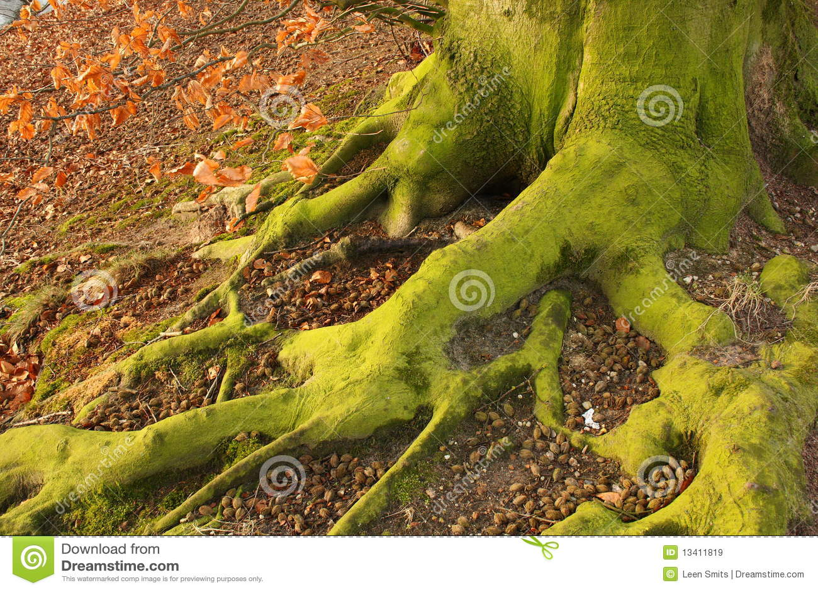 Fot green