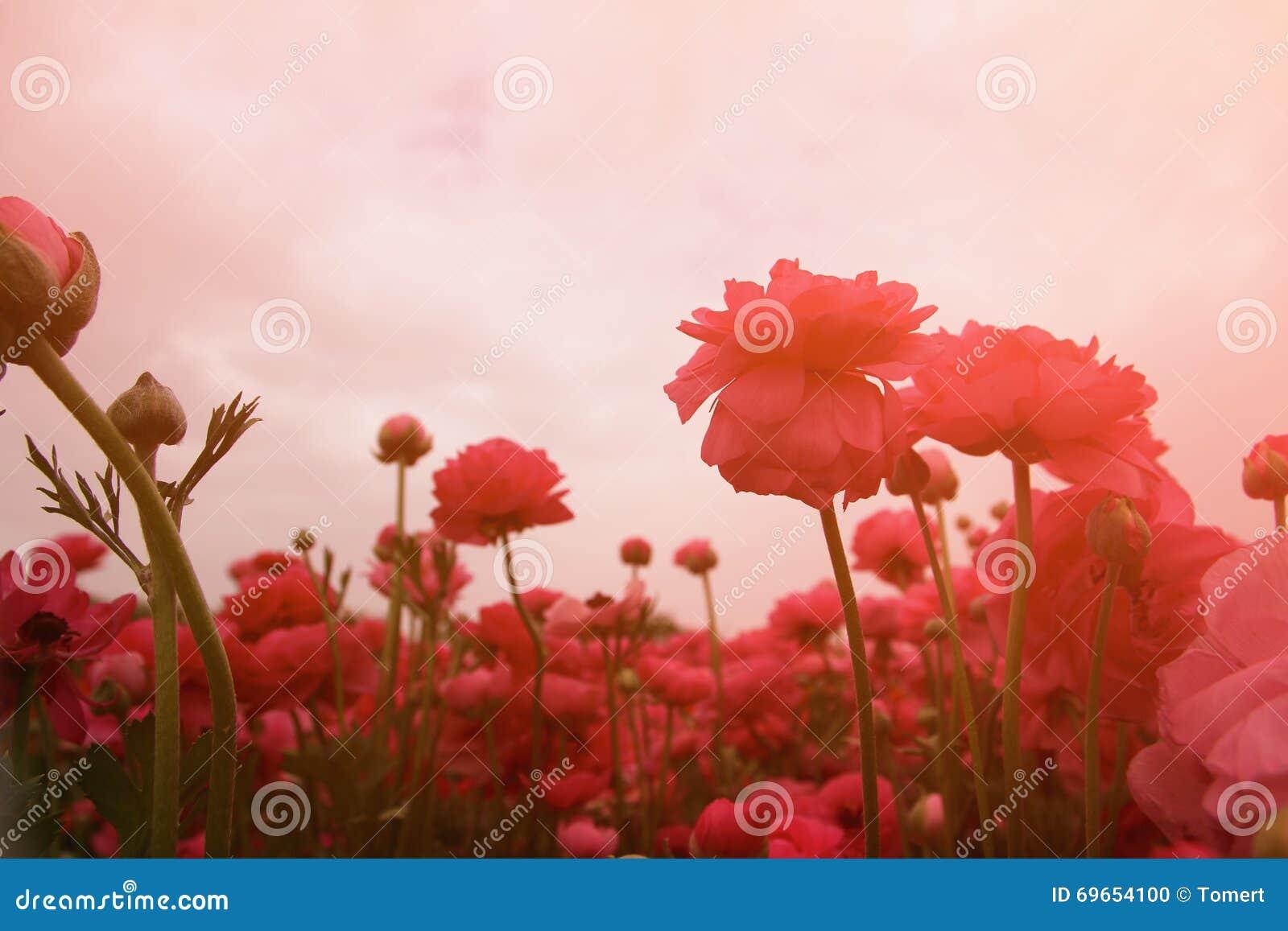 A foto abstrata e sonhadora com baixo ângulo de flores da mola contra o céu com luz estourou o vintage filtrado e tonificado