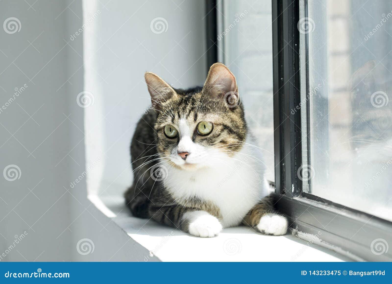 Foto adorabili di un gatto