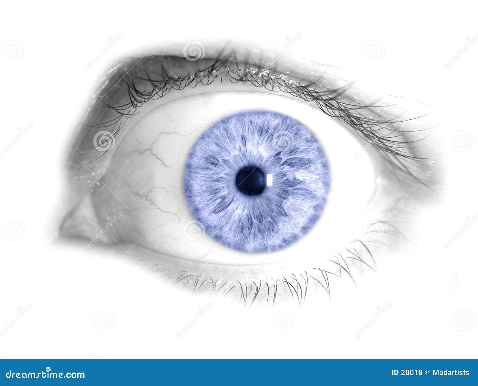 Foto aislada azul del ojo humano