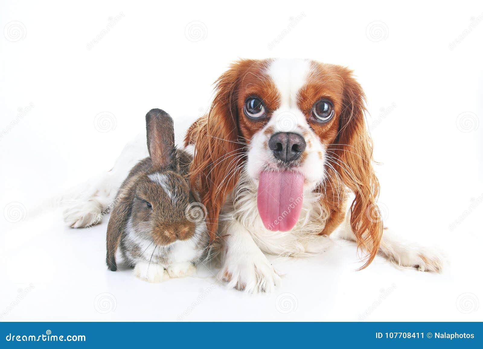 Foto animal engraçada do cão Os cães de animais de estimação os mais engraçados dos animais O coelho do coelho poda e cachorrinho
