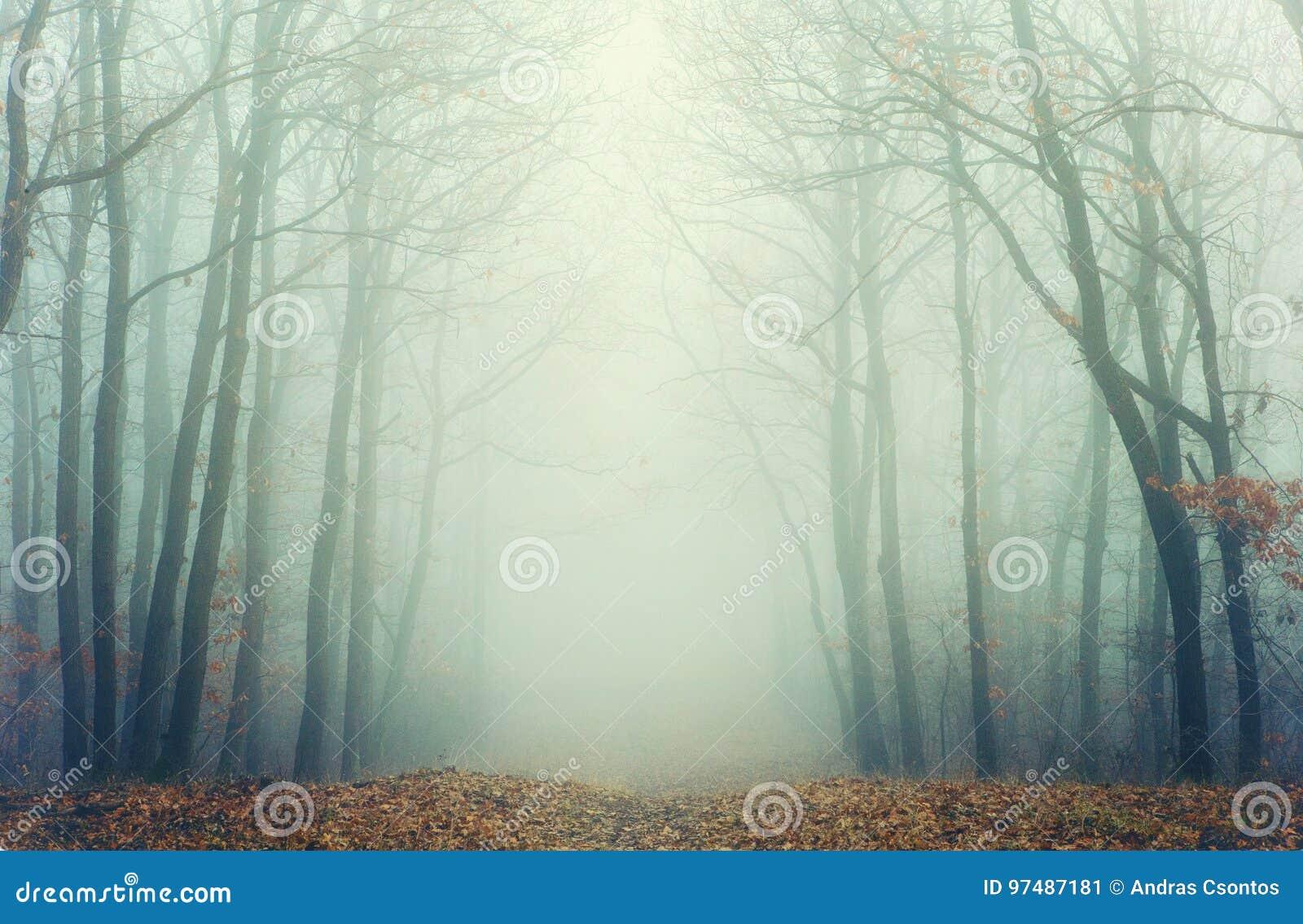 Foto artistica di una foresta nebbiosa con gli alberi sfrondati