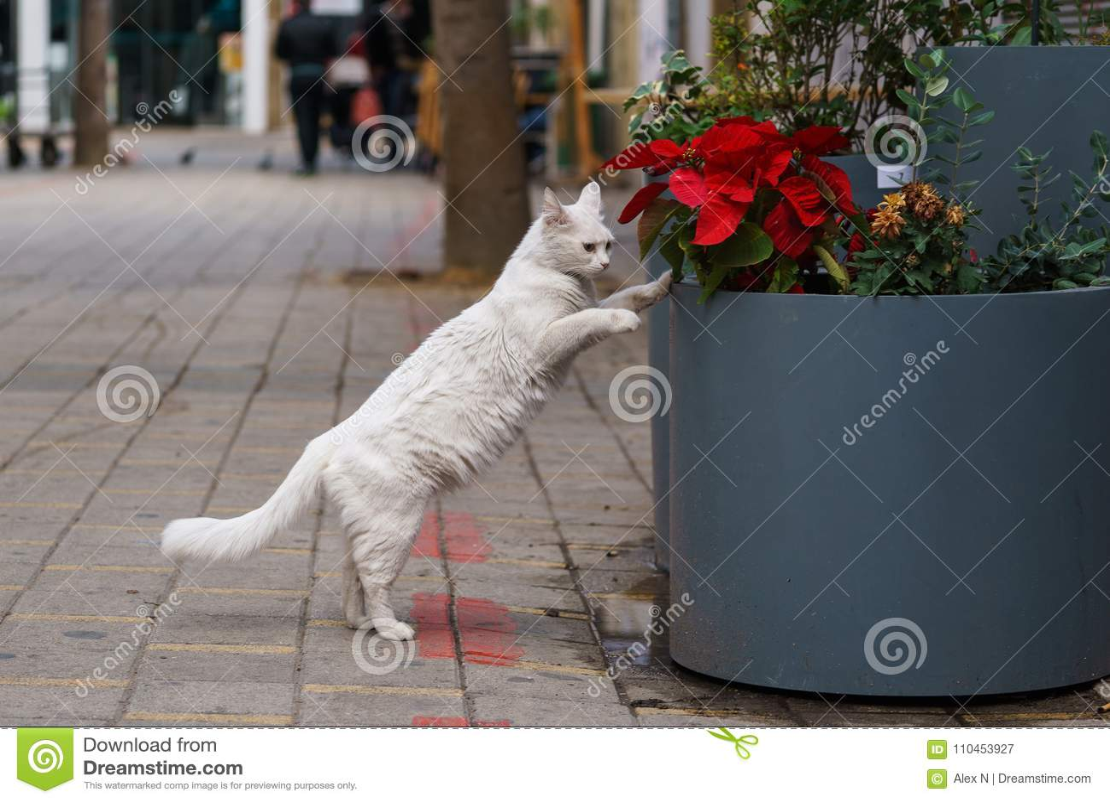 Foto av den hemlösa katten på den near blomman för gata