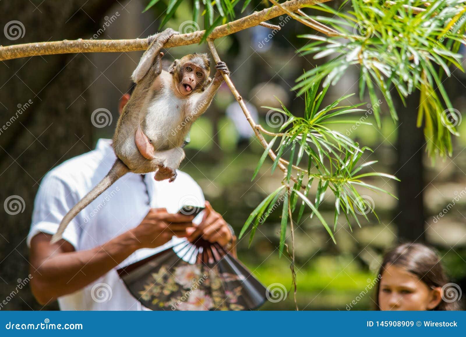 Foto-bombardeado por um macaco